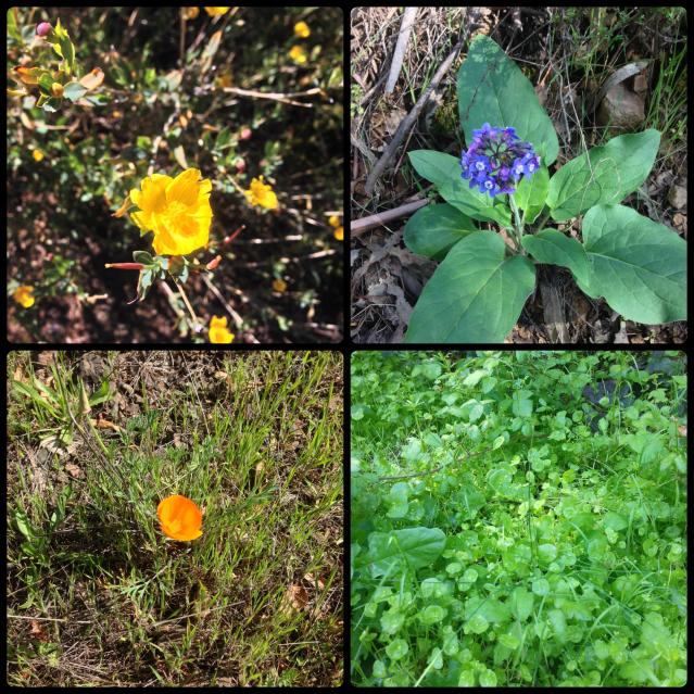 WildflowersSierraAzul